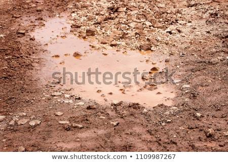 田舎道 秋 雨 葉 道路 国 ストックフォト © rojoimages