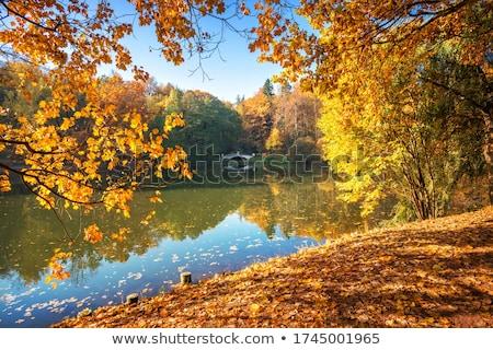 秋 午前 公園 自然 アーキテクチャ 秋 ストックフォト © SergeyAndreevich