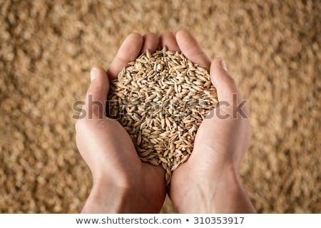 manos · semillas · maíz · experimentado - foto stock © lincolnrogers