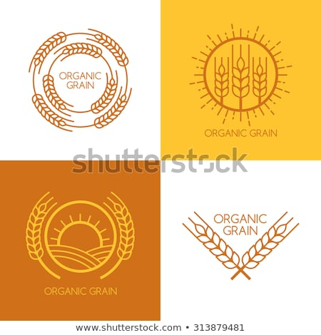 wheat ears concept illustration in flat design stock photo © robuart