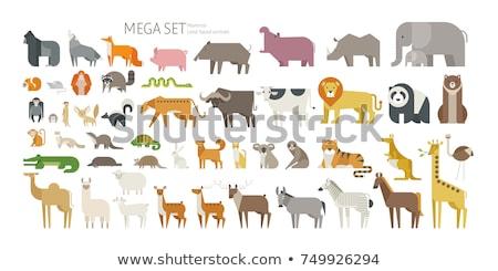 Ló terv fekete vektor háziállat vidék Stock fotó © robuart