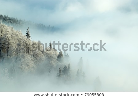Hoarfrost and fog in a mountain forest Stock photo © Kotenko