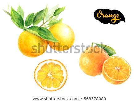 Vízfesték egész fél narancs kézzel rajzolt festék Stock fotó © Sonya_illustrations