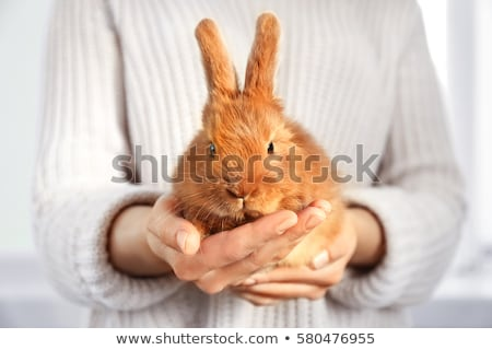 femme · lapin · alimentaire · main · sourire · visage - photo stock © is2