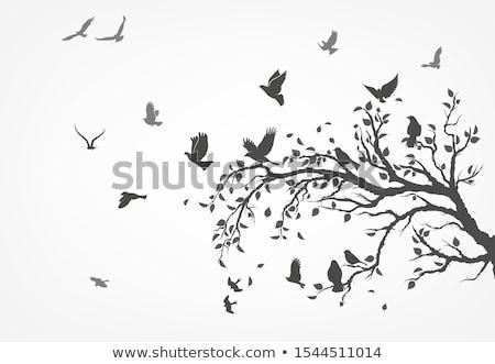 Galambfélék fa ágak szépség madár szín Stock fotó © Kidza