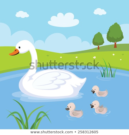 swan in a pond Stock photo © almir1968