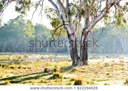 íny fa vidéki farm vidék kosz Stock fotó © lovleah