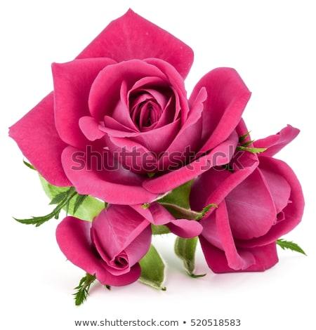 закрывается · цветы · границе · Purple · сирень · розовый - Сток-фото © neirfy