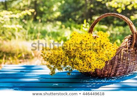 St. John's wort flowers in a wicker basket Stock photo © madeleine_steinbach