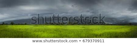 Sağanak örnek ağaç arka plan sanat Stok fotoğraf © bluering