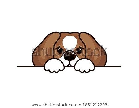Cute beagle icon, small hunting dog with white and brown fur isolated, domestic animal, vector illus Stock photo © MarySan