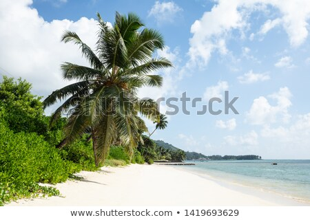 Turtle Bay Beach, Mahe Island, Seychelles Stock photo © AndreyPopov