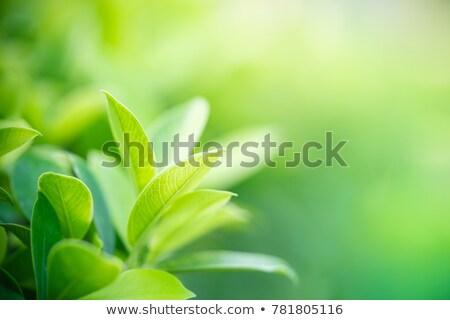 Stockfoto: Groene · bladeren · plant · groeiend · gezond · leven · milieu · Blauw