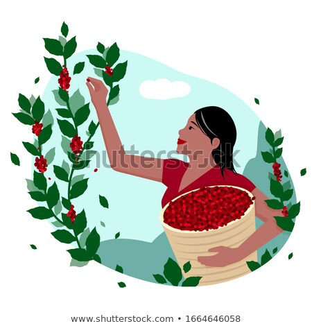 Harvesting People Fruit Trees Vector Illustration Stock photo © robuart