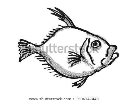 Silver Dory New Zealand Fish Cartoon Retro Drawing Stock photo © patrimonio