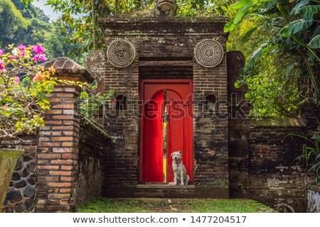 Chien rouge porte d'entrée maison rue Photo stock © galitskaya