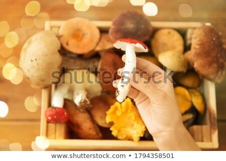 El kutu yenilebilir mantar doğa Stok fotoğraf © dolgachov