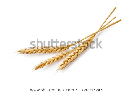 Foto stock: Milho · ouvido · isolado · branco · comida · natureza
