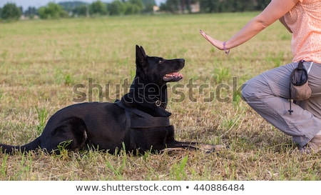 Obedient sitting dog Stock photo © photosebia