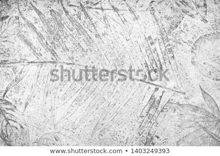 marks of leaf on the concrete Stock photo © scenery1