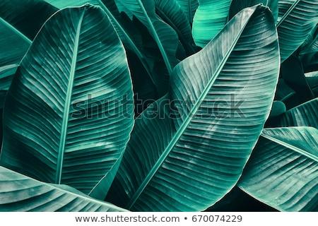 Groene grunge behang ruw oppervlak textuur Stockfoto © tarczas