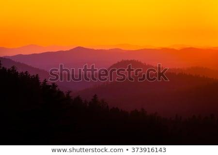sunset in yosemite national park with tree silhouettes stock photo © lunamarina