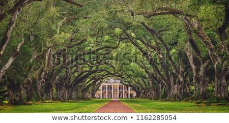 beautiful oak alley stock photo © meinzahn