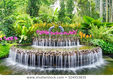 Foto stock: Orchids In The Botanical Garden