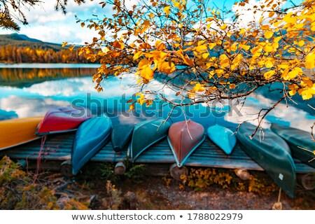 Gouden vallen bos natuur bomen bergen Stockfoto © emattil