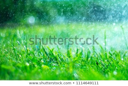 grass in garden for rain Stock photo © art9858
