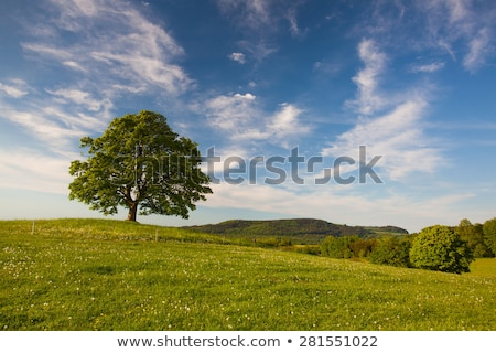 Memorial maple tree on the mystic place in Votice Stock photo © CaptureLight