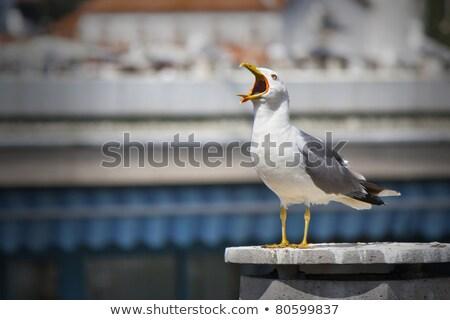 чайка пляж морем птица песок Сток-фото © latent