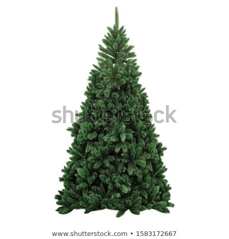 新 聖誕節 實 松樹 背景 商業照片 © Julietphotography
