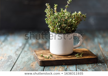 Bunch of thyme Stock photo © Fotografiche