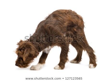 Cute hond permanente alleen dier huisdier Stockfoto © wavebreak_media