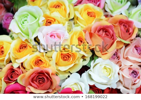Colorful roses bunches Stock photo © smithore
