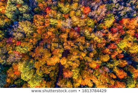 Gyönyörű ősz erdő napos idő Litvánia szépség Stock fotó © Taigi