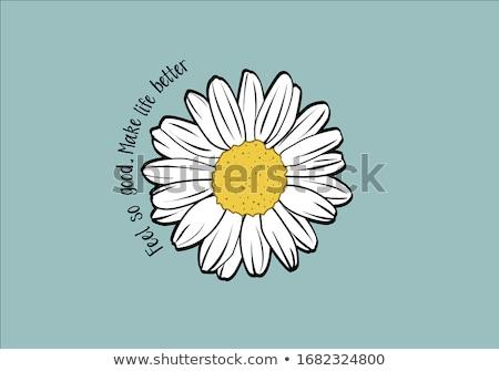 Garden Daisy Flowers Stock photo © zhekos
