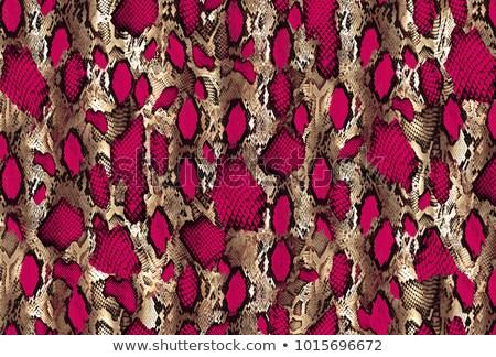 クローズアップ 美しい ヘビ パターン 抽象的な 自然 ストックフォト © taviphoto