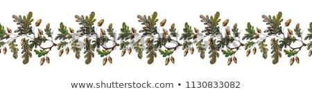 ősz keret tölgy levelek dekoratív ágak Stock fotó © kostins
