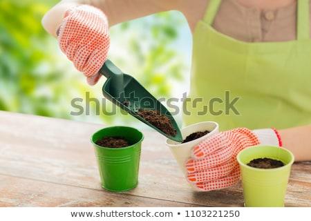 Donna mani suolo giardinaggio Foto d'archivio © dolgachov