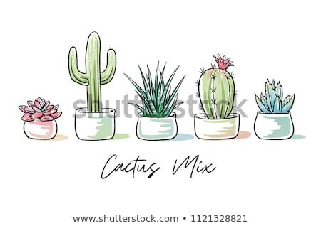 cactus · vettore · icona · isolato · bianco · natura - foto d'archivio © arkadivna