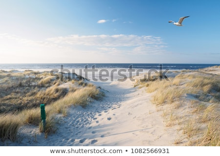 Dune island, in north sea, Germany Stock photo © artush
