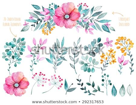 Floral Elemente Frühling Sommer Laub flora Stock foto © robuart