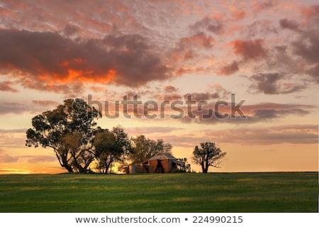 Naplemente vidéki Ausztrália csinos mezőgazdasági puha Stock fotó © lovleah