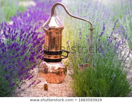 Aroma gyógynövény fokhagyma fa asztal fa konyha Stock fotó © tycoon