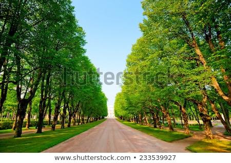зеленый аллеи деревья пышный листьев листва Сток-фото © dmitry_rukhlenko
