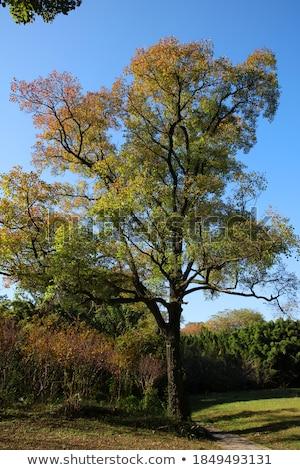 zomer · bomen · heuvel · blauwe · hemel · kleine · groep · jonge - stockfoto © ansonstock
