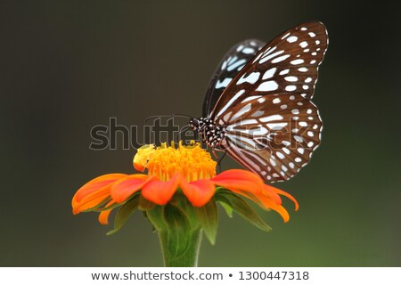 Araignée fleur jaune macro vue cheveux Photo stock © Musat