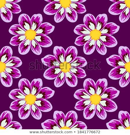 Dahlias mosaic Stock photo © Musat